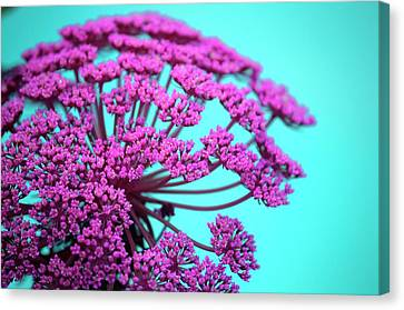 Pink Lace 02 Canvas Print by Bobby Villapando