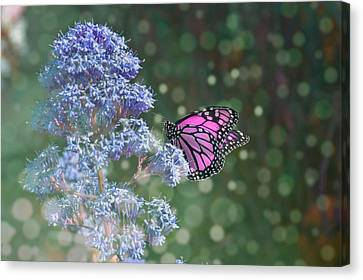 Pink Lady Canvas Print
