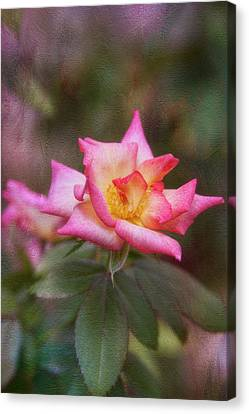 Pink Lady Canvas Print by Joan Bertucci