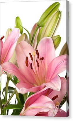 Water Drops Canvas Print - Pink Lilies 07 by Nailia Schwarz