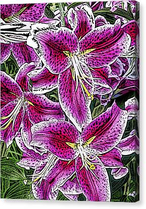 Pink Lillies Canvas Print