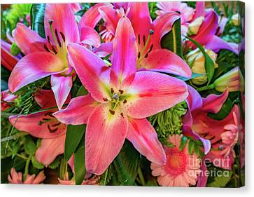 Pink Lily Canvas Print by Adrian Evans