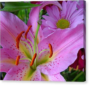 Pink Lily Canvas Print by Robert Knight