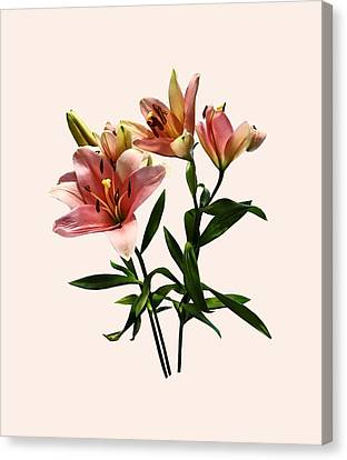 Pink Lily Trio Canvas Print