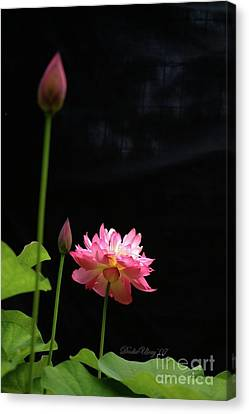Canvas Print featuring the photograph Pink Lotus In Black by Dodie Ulery