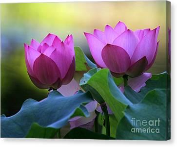 Pink Lotus Canvas Print by Sabrina L Ryan