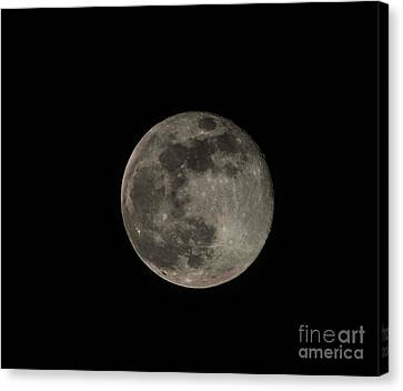Canvas Print featuring the photograph Pink Moon by David Bearden
