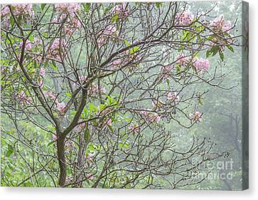 Canvas Print featuring the photograph Pink Mountain Laurel by Chris Scroggins