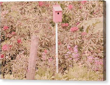 Canvas Print featuring the photograph Pink Nesting Box by Bonnie Bruno