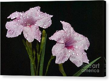 Pink On Black  Canvas Print by Skip Willits