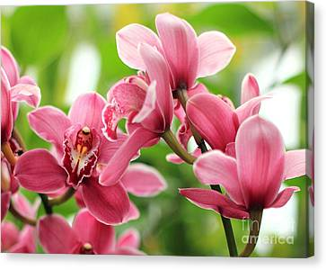 Canvas Print featuring the photograph Pink Orchid II by Angela Rath