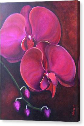Pink Orchid Canvas Print by Silvia Philippsohn