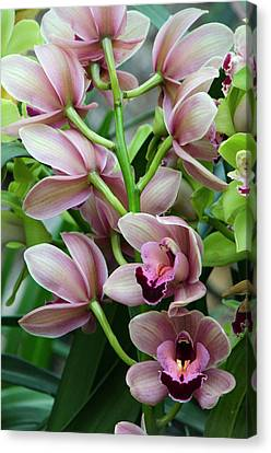Canvas Print featuring the photograph Pink Orchids 2 by Ann Bridges