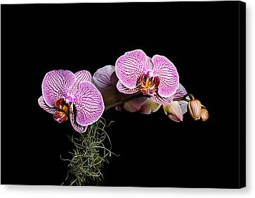 Canvas Print featuring the photograph Pink Orchids by Gary Dean Mercer Clark