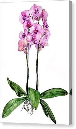 Canvas Print featuring the painting Pink Orchids by Heidi Kriel