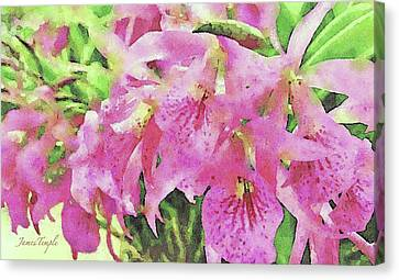 Canvas Print - Pink Orchids by James Temple