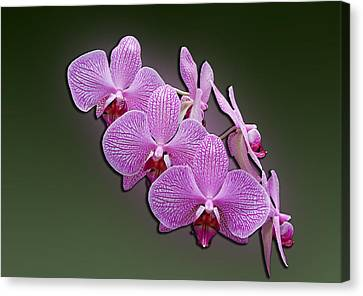 Canvas Print featuring the photograph Pink Orchids by John Haldane