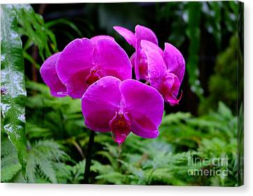 Pink Orchids Canvas Print by Mini Arora