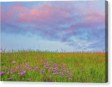 Pink  Over Pink  Canvas Print by Marc Crumpler