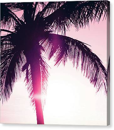 Canvas Print featuring the photograph Pink Palm Tree Silhouettes Kihei Tropical Nights by Sharon Mau