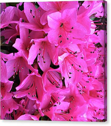Canvas Print featuring the photograph Pink Passion In The Rain by Sherry Hallemeier