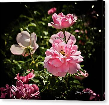 Canvas Print featuring the photograph Pink Passion  by Joann Copeland-Paul