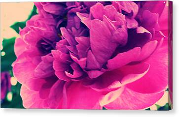 Canvas Print featuring the photograph Pink Peonie by Paul Cutright