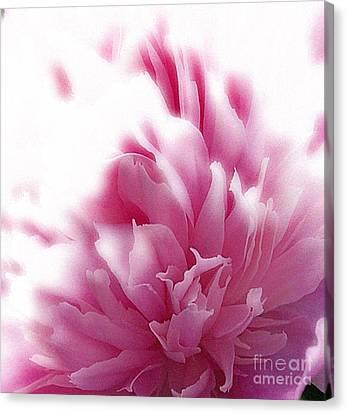 Pink Peony Canvas Print by Addie Hocynec