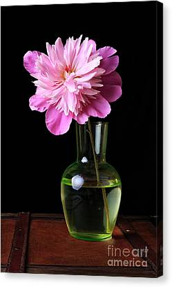 Pink Peony Flower In Vase Canvas Print