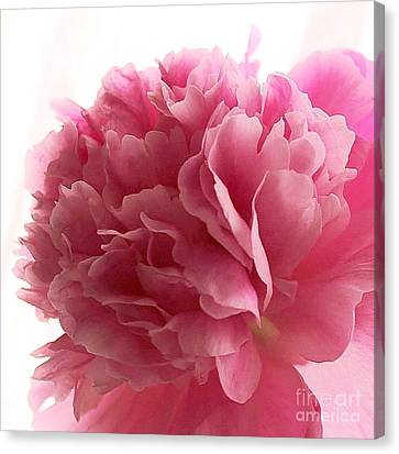 Pink Peony Canvas Print by Katy Mei