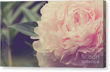 Canvas Print featuring the photograph Pink Peony Vintage Style by Edward Fielding