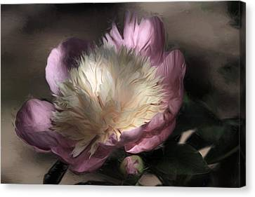 Pink Perfection Canvas Print by Donna Kennedy