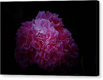 Pink Perfection Floral Canvas Print