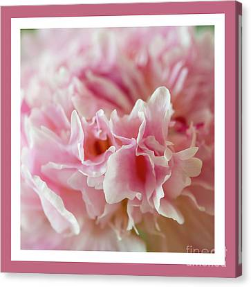 Canvas Print featuring the photograph Pink Perfection by Wendy Wilton