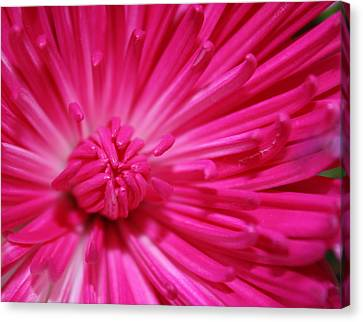 Pink Petals Canvas Print by Inspired Arts