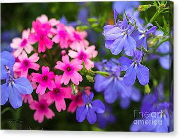 Pink Phlox And Violet Flowers Canvas Print by Corey Ford