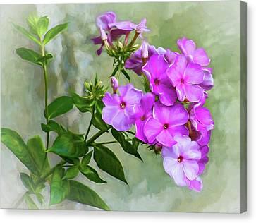 Pink Phlox - Paint Canvas Print by Steve Harrington