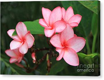 Canvas Print featuring the photograph Pink Plumerias by Edward R Wisell