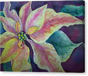 Canvas Print featuring the painting Pink Poinsettia by Sandy Collier