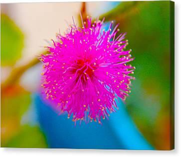 Pink Puff Flower Canvas Print