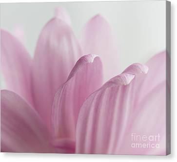 Pink Reach Canvas Print