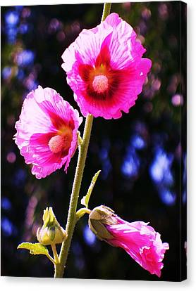 Pink Red Flower Canvas Print by Eric  Schiabor