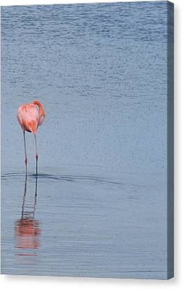 Pink Reflections Canvas Print by Arry Murphey