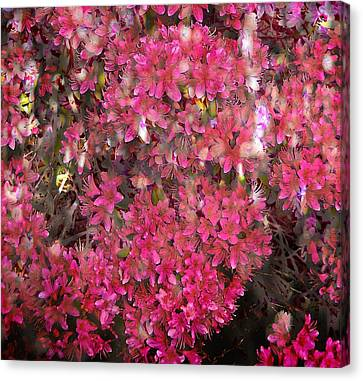 Pink Rhododendron Canvas Print by Thom Zehrfeld