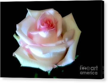 Pink Rose Bud Canvas Print by Jeannie Rhode