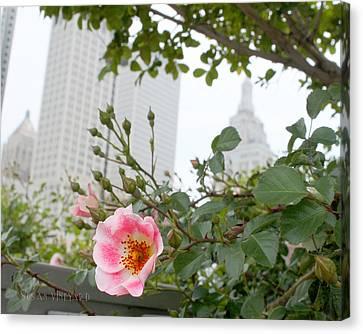 Pink Rose Of Tulsa Canvas Print by Susan Vineyard