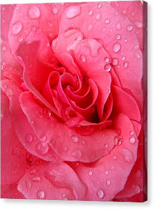 Canvas Print featuring the photograph Pink Rose by Patricia Januszkiewicz