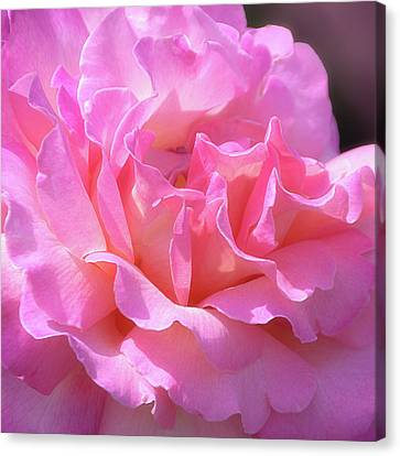 Canvas Print featuring the photograph Pink Rose Ruffles by Julie Palencia