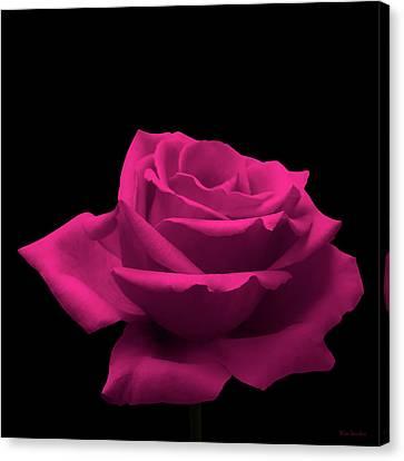 Close Up Floral Canvas Print - Pink Rose by Wim Lanclus