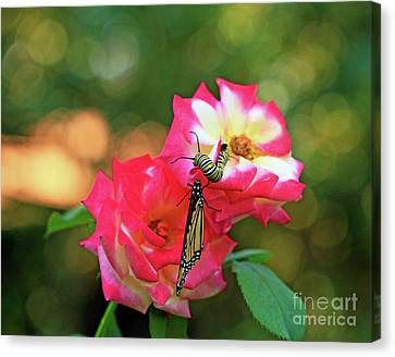 Pink Roses And Butterfly Photo Canvas Print
